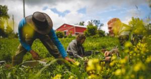 Biologische teelt bevat minder pesticiden en gifstoffen, waardoor je je weerstand kan verhogen